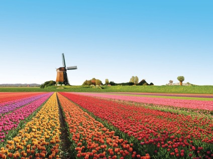 Holland-flowers
